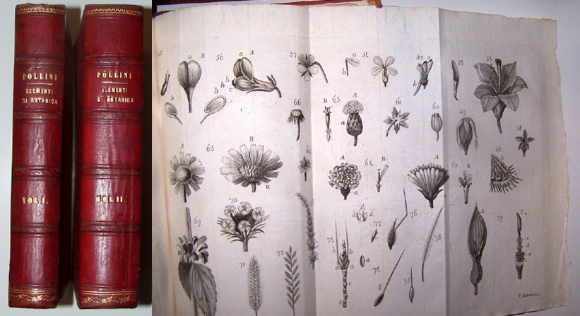 Image for ELEMENTI DI BOTANICA - Two Volumes