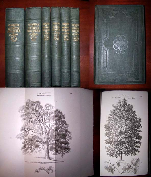 Image for ARBORETUM ET FRUTICETUM BRITANNICUM, or   The trees and shrubs of Britain, native and foreign, hardy and half-hardy, pictorially and botanically delineated, and scientifically and popularly described